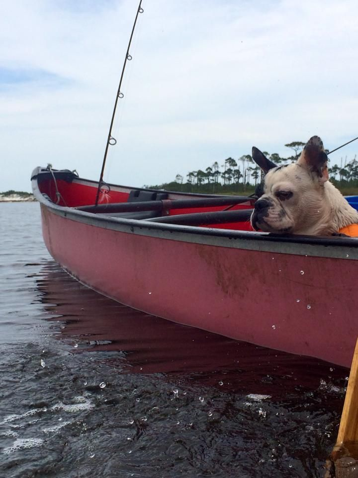 Even our French Bulldog, Rocky loves the weekend adventures.
