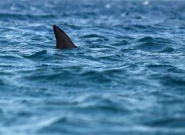 Harrowing Photos Show Surfers Fleeing Large Shark