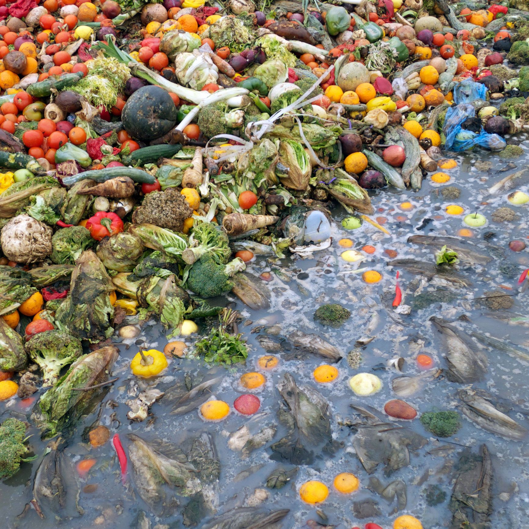Large pile of discarded fruit and vegetables, some floating in water.