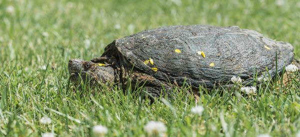 Man Allegedly Beats Turtle To Death With Hammer, Claims Self-Defense