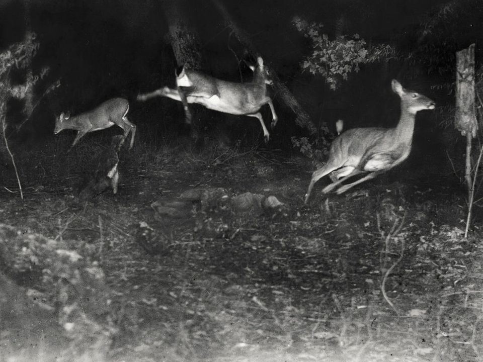 The July 1906 issue of <i>National Geographic</i> featured its first ever wildlife photographs. Editor Gil Grosvenor printed