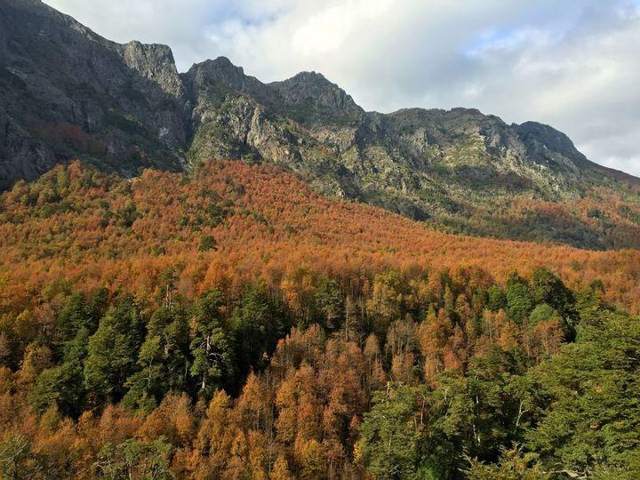 Fall colors in theRegión de la Araucanía