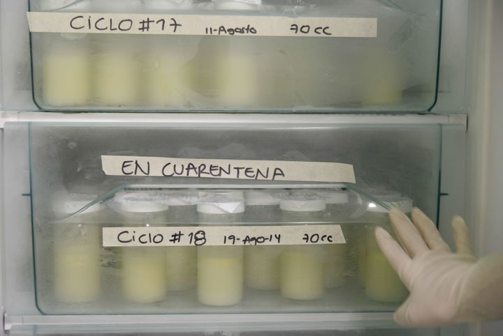 Milk bottles are pasteurized during the first day of donation of human milk at Medellín's General hospital on August 2