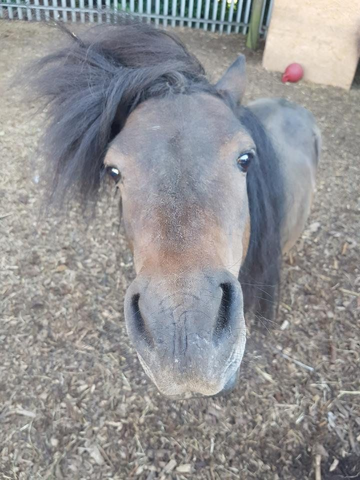 Mocha, a Shetland pony, broke into a pub and had to be coaxed out by the landlord with bar snacks.