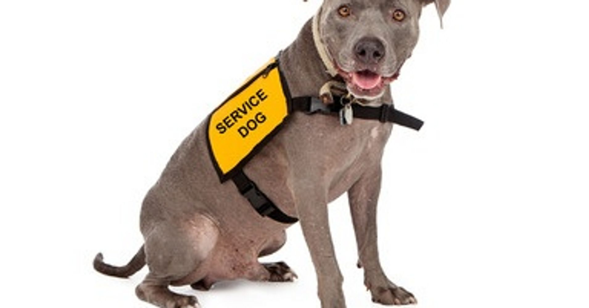 The fake service animal problem huffpost 1betcityfo Image collections