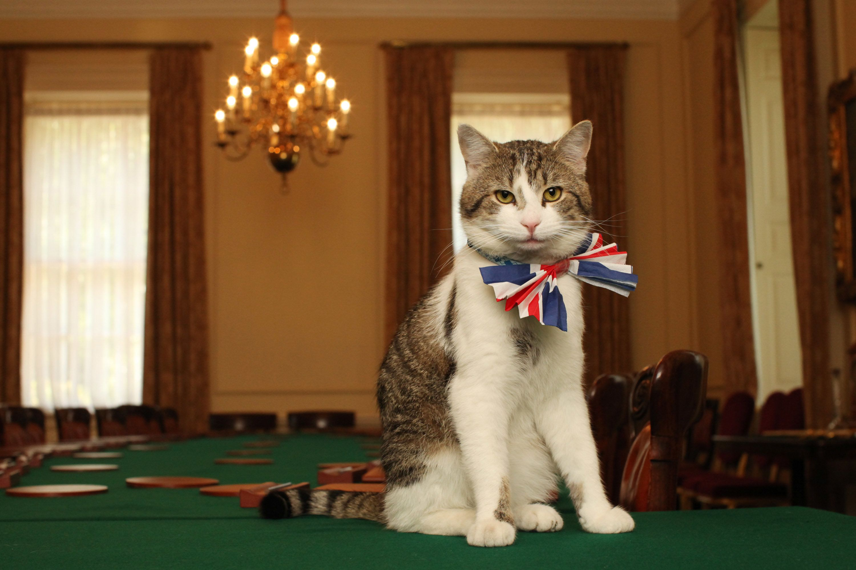 People Are Quite Angry That Larry The Downing Street Cat Didn't Get A
