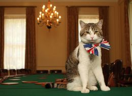 People Are Quite Angry That Larry The Downing Street Cat Didn't Get A Knighthood