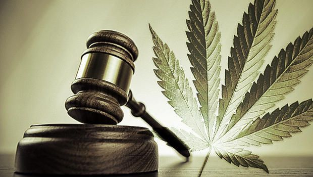 Steven Machat's crusade to legalize marijuana