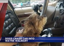 Woman Leaves Dogs In Car, Dog Crashes Car Into Supermarket