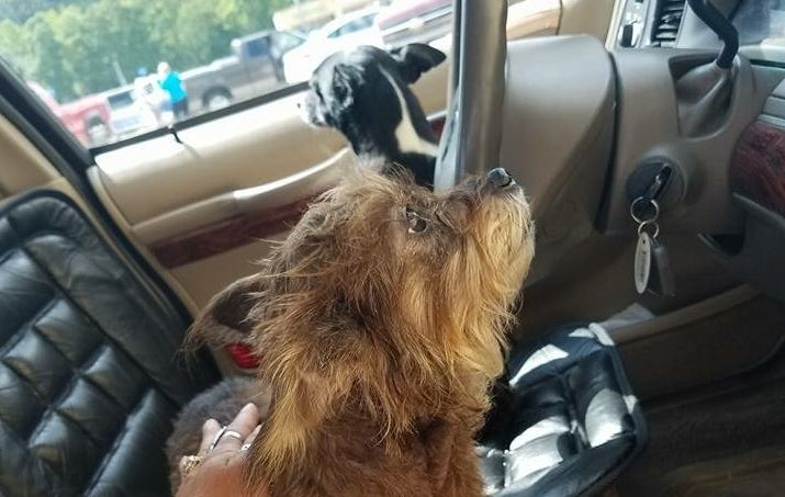 The two dogs were left in the car by their owner, an elderly woman, according to witnesses.