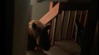 Bear in a house.