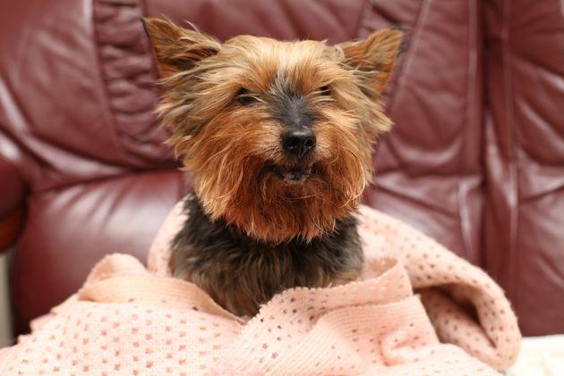 Britain's oldest dog, Jack, was killed in a brutal attack on