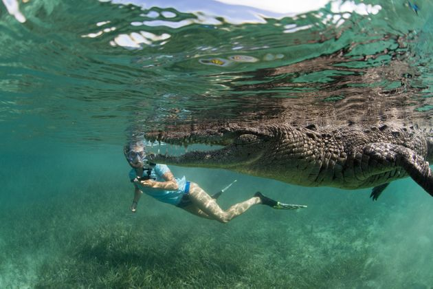 Alexa Fink is seen swimming with a crocodile in pictures taken by her wildlife-obsessed