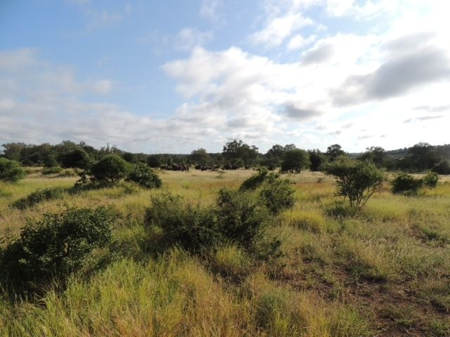The Kapama Game Reserve covers over 30,000 acres