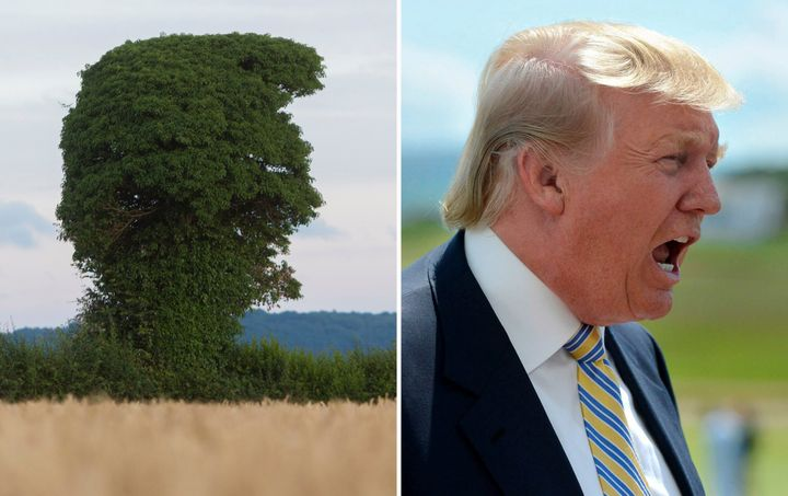 British photographer Jon Rowley believes a tree in in Herefordshire, England, looks amazingly like Donald Trump.