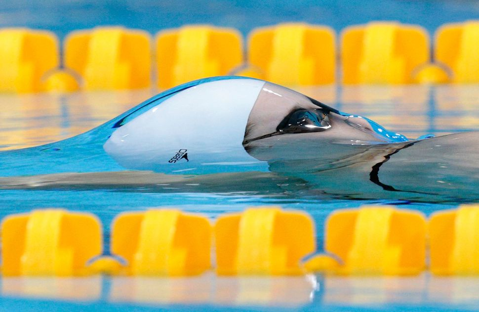An Australian swimmer competes in the backstroke event at the London 2012 Olympics.