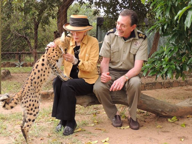 Guests can interact with a rescued serval