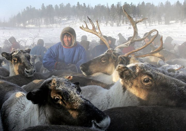 Anthrax from a 75-year-old reindeer carcass has been linked to an outbreak of the pathogen in Siberia.
