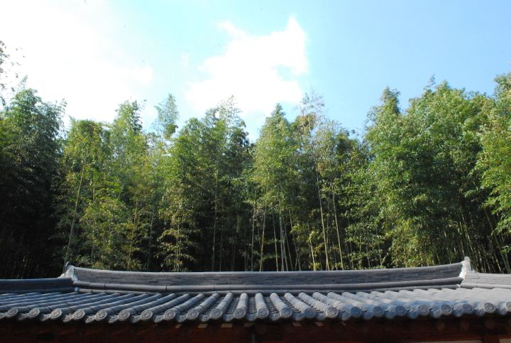 <p><strong>Damyang's Bamboo Forest | </strong>For a truly relaxing experience, spend an afternoon walking around Juknokwon among all the bamboo trees. Grab a bamboo nutella ice cream while you're at it! There's something utterly peaceful to the area, and you can easily get lost for hours.</p>