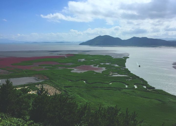 <p><strong>Suncheon Bay | </strong>My Korean July is typically spent sweltering underneath an air conditioner unit, hiding from the humidity, but I will make an exception for this eight-thousand-year-old bay. With nearly 6,000 acres of tideland and 570 acres of reeds, Suncheon Bay is perfect to witness virgin Korean nature at its cleanest. Make sure you walk along the reed fields and up around the mountain to get a really gorgeous view!</p>