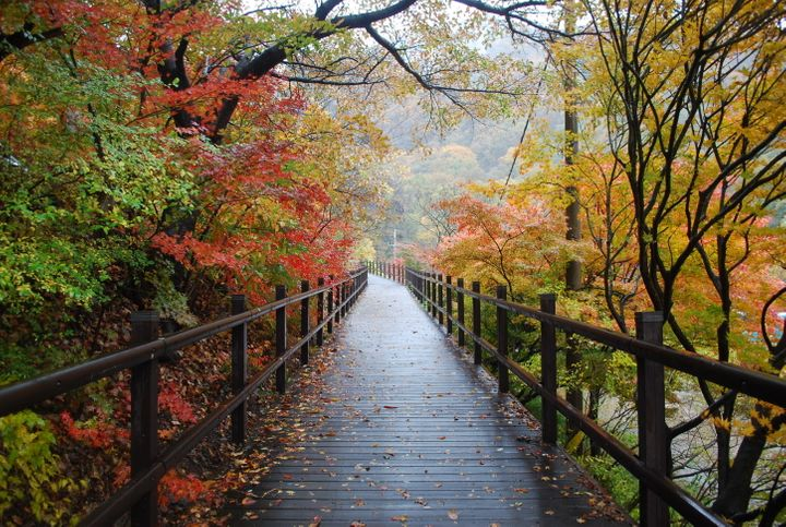 """<p><strong>Mt. Naejang (or Naejangsan) 