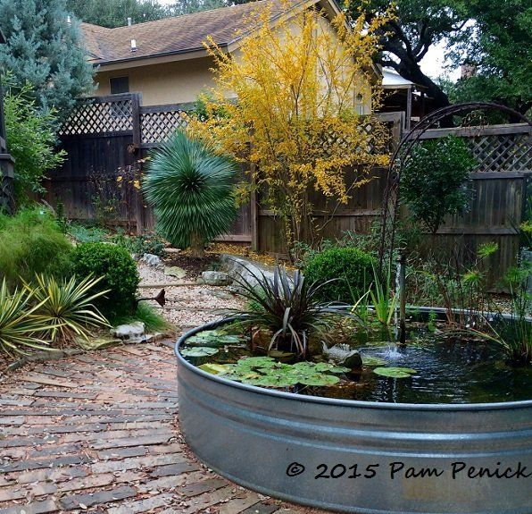 A few plants can go a long way in your backyard.