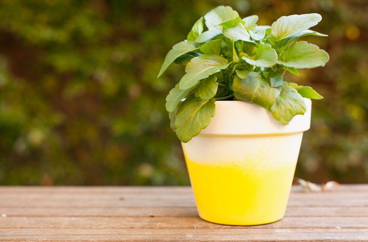 Ombre pots compliment any type of plant or flower.