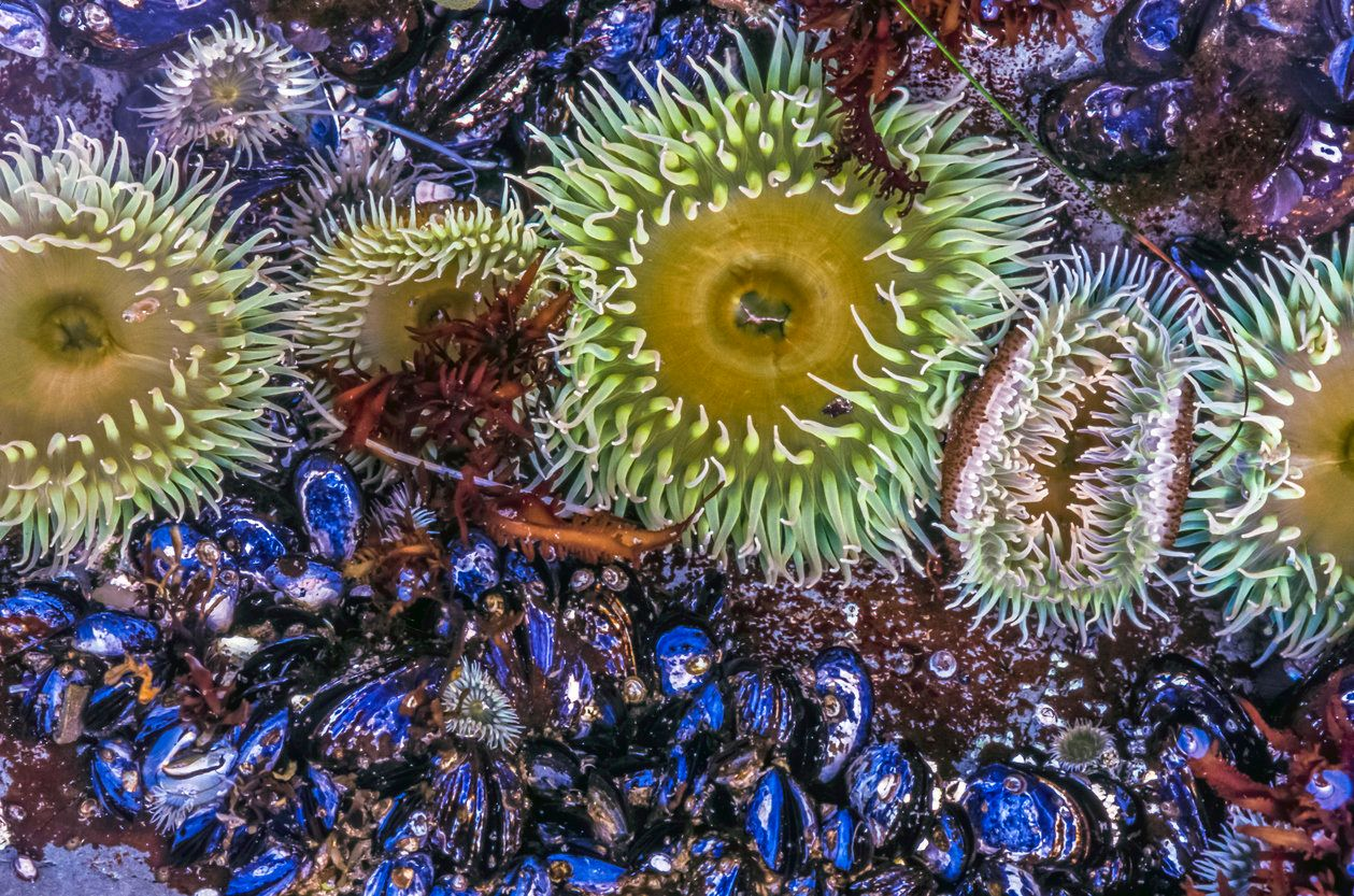 Sea Anemone Could Be The Answer To Reversing Hearing Loss In