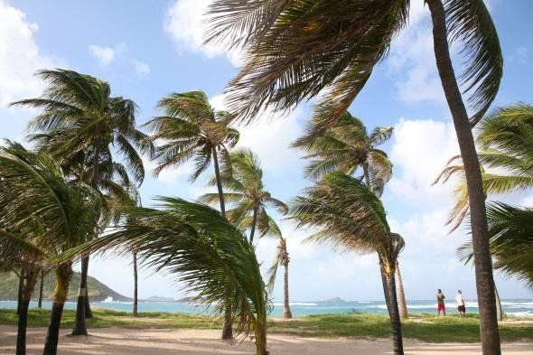 Palm trees blow in the breeze in St. Barts.