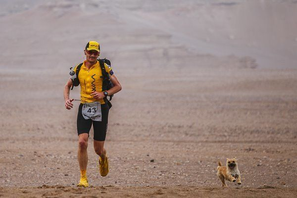 Stray Dog Finds Her Human When She Joins Him For 77 Miles In