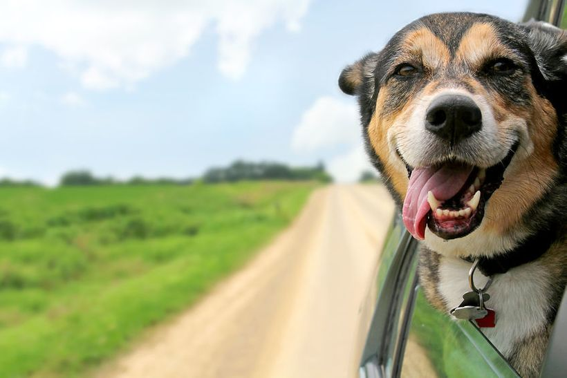 A happy pooch heads off on vacation.