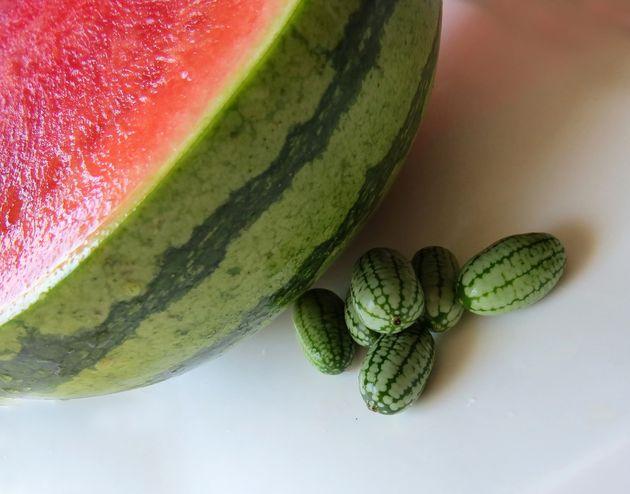 世界一かわいい夏のフルーツ「きゅうりメロン」って?