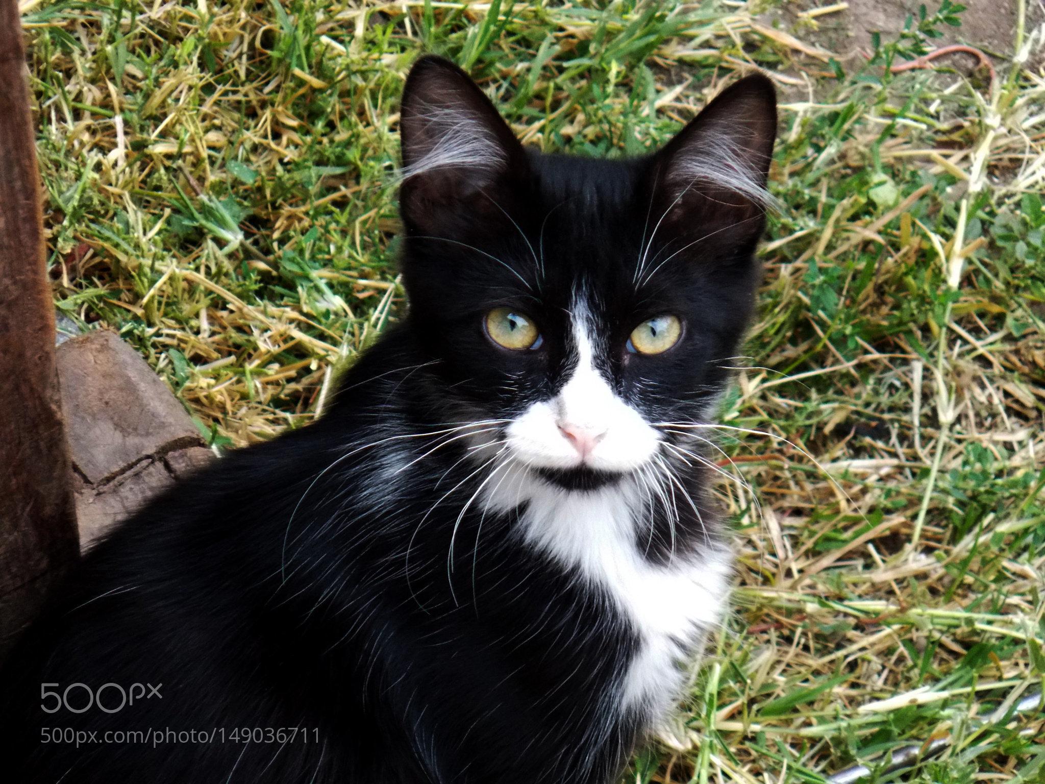 Gato negro