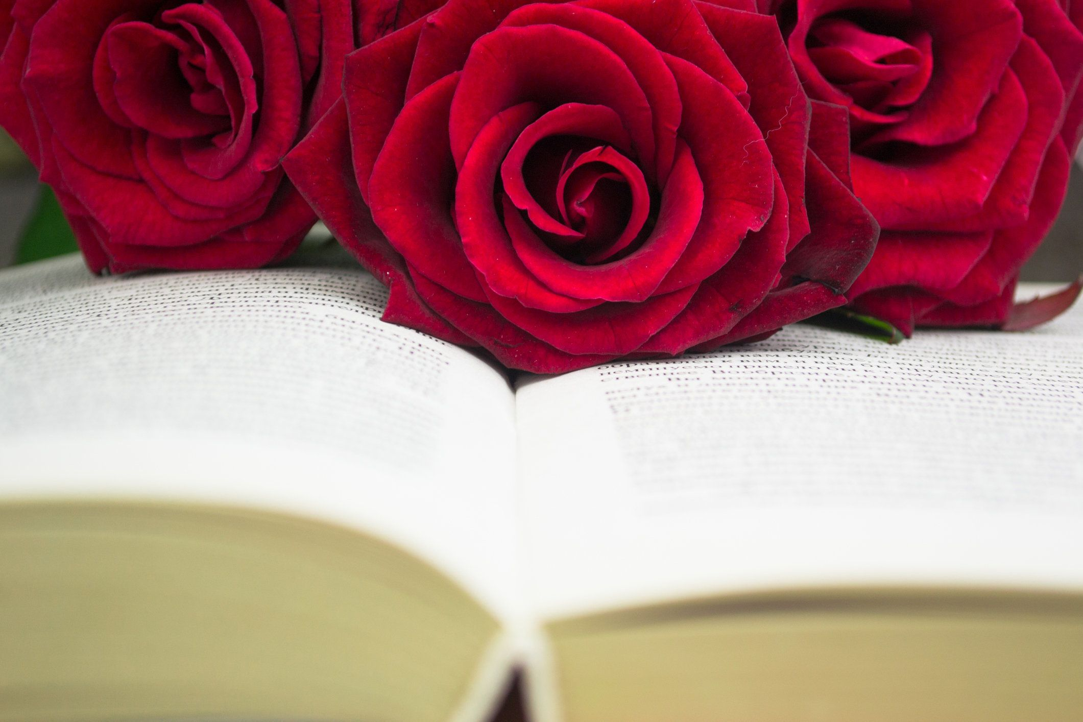 The open book and red roses. Close up