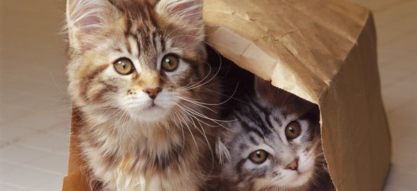 Five Reasons We Absolutely Love Cats