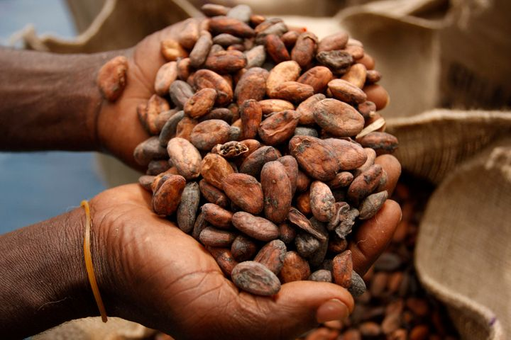 Dried cocoa beans ready to be packed in western Ghana.