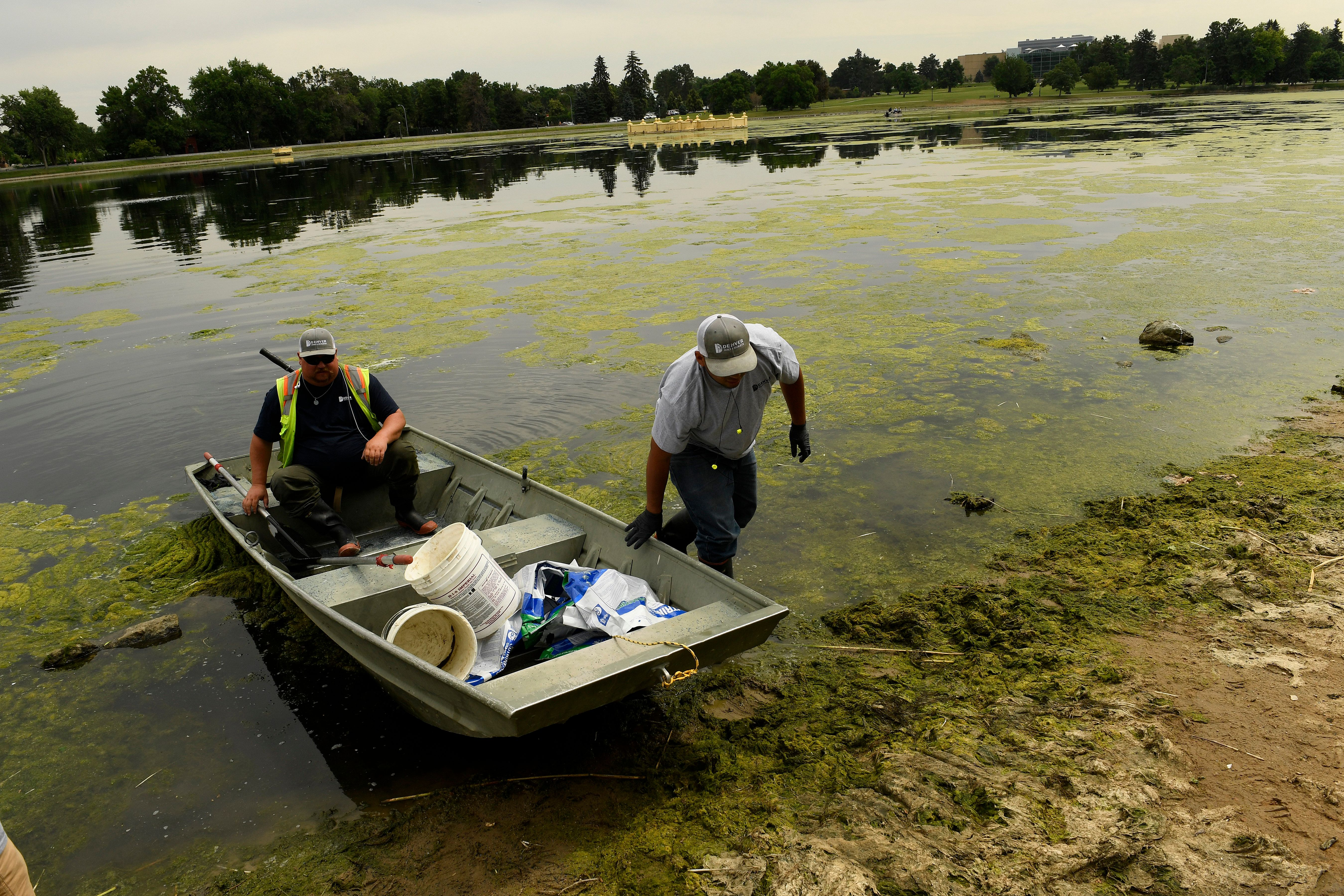 Algal blooms, like these on Ferril Lake in Denver, are a nightmare for the environment and could be exacerbated...
