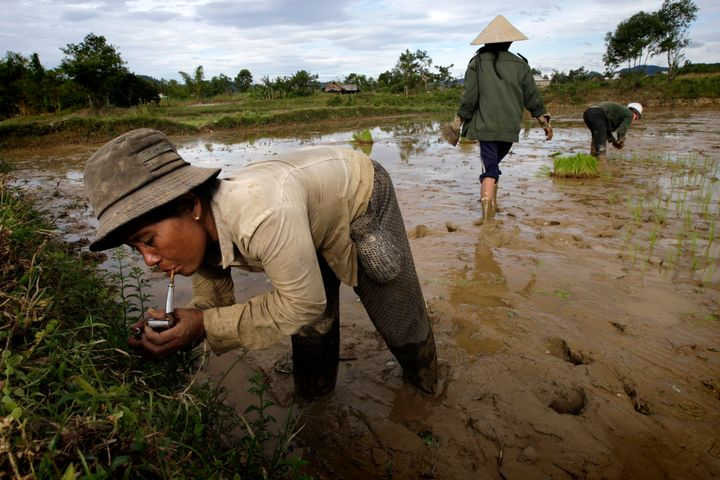 """Farmers plant rice near a """"hot spot"""" located on a former airstrip of a U.S. Special Forces base on June 28, 2009, in Luoi, Vietnam. Herbicides, including Agent Orange, had been stored at this former airstrip and the land was highly contaminated."""