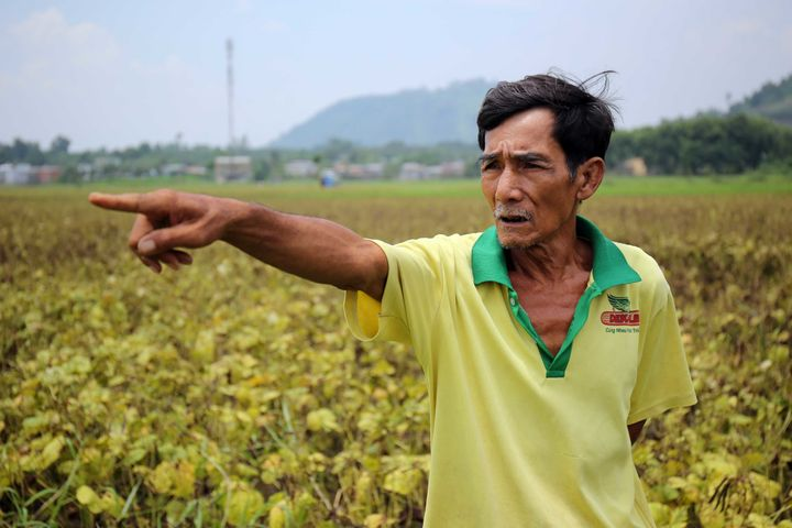 Farmer Nguyen Hong Lam stands in the middle of his field pointing at the crops where he has been growing genetically modified corn.