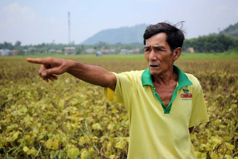 Farmer Nguyen Hong Lam stands in the middle of his field pointing at the crops where he has been growing genetically modified
