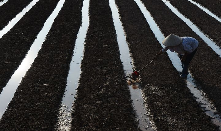 A farmer working on a vegetable fields in Khoai Chau district, northern province of Hung Yen on Sept.29, 2014.