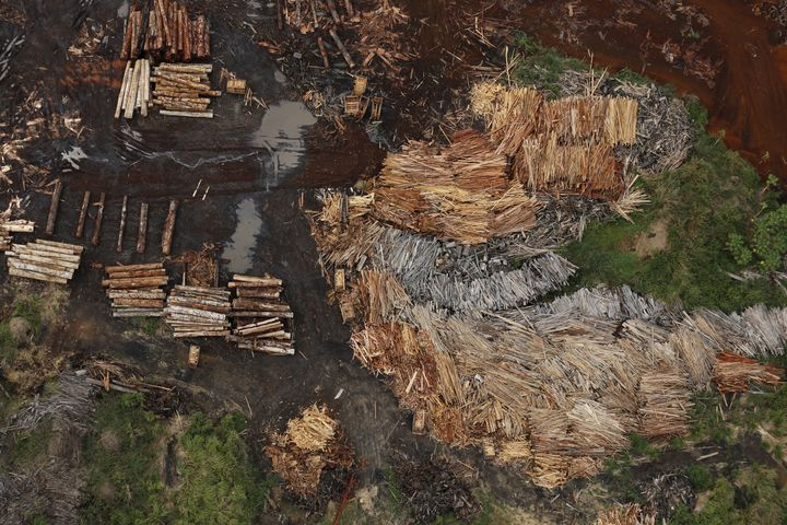 Sawmills that process illegally logged trees from the Amazon rainforest.