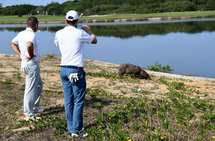 Clothes-wearing mammals observing a non-clothes-wearing capybara.