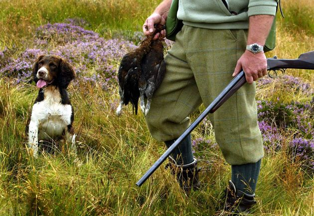 The Glorious Twelfth marks the start of grouse hunting