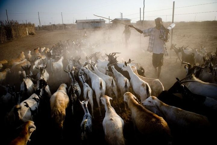 SAPARM helps traditional pastoralists in Ethiopia find greener pasture with satellite maps.