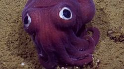 Scientists Seriously Can't Handle This Adorable Lil' Stubby