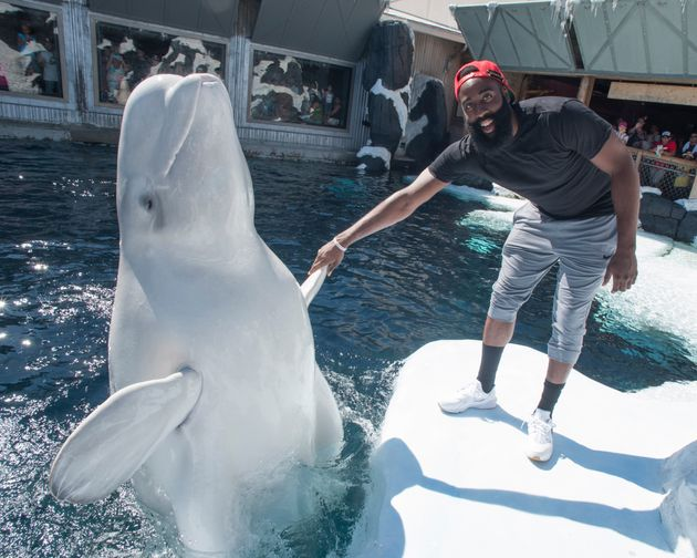 NBA player James Harden poses with Klondike, a beluga whale at SeaWorld San Diego, in