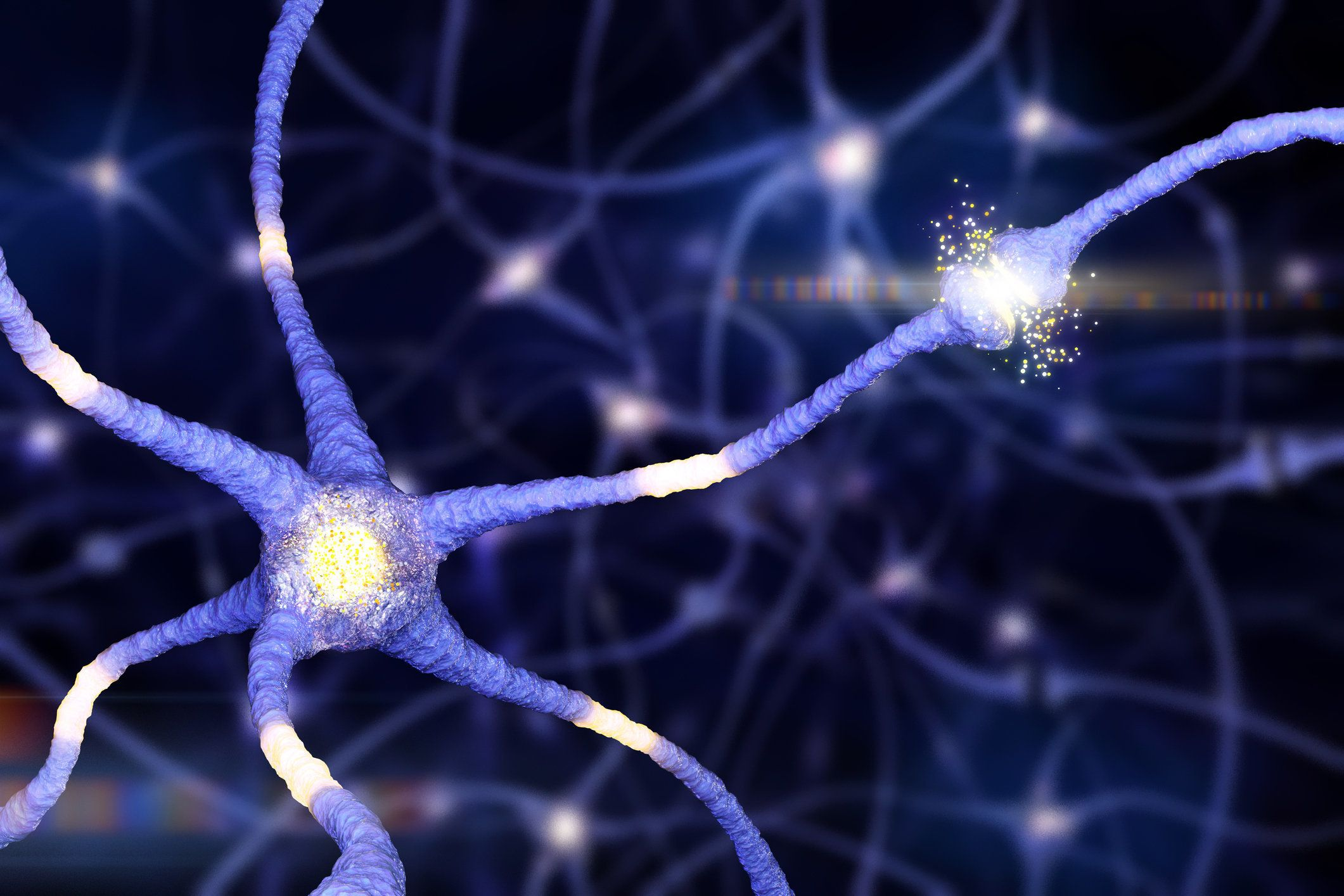 Neuron (or nerve cell) sending electrical and chemical signals to synapse connections.