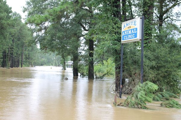 Floodwaters are seen in Amite, Louisiana.