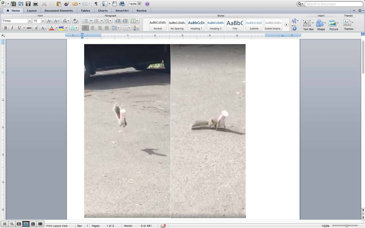 A squirrel is seen bouncing around like a jumping bean after getting a cup stuck on its head.